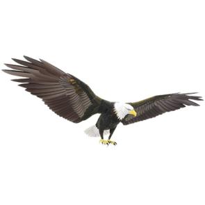 Papercraft del Águila de Cabeza Blanca. Manualidades a Raudales.