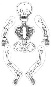 Marioneta de un esqueleto.