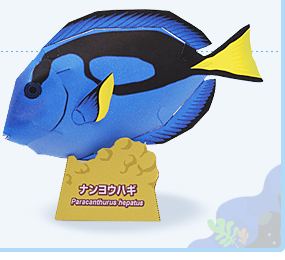 Papercraft del Pez Paracanthurus Hepatus. Manualidades a Raudales.